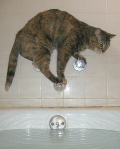 Is Showering More Popular with Cats, or People Living with Dementia?
